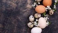 تكلفة مشروع توزيع البيض