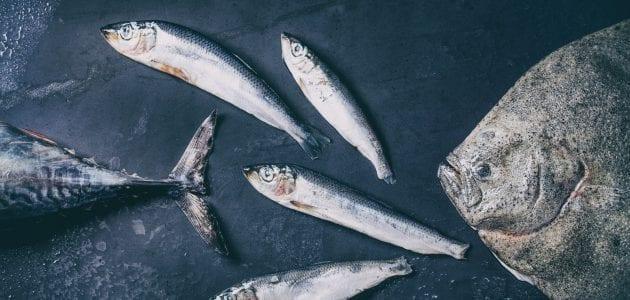 أفضل أنواع سمك التونة