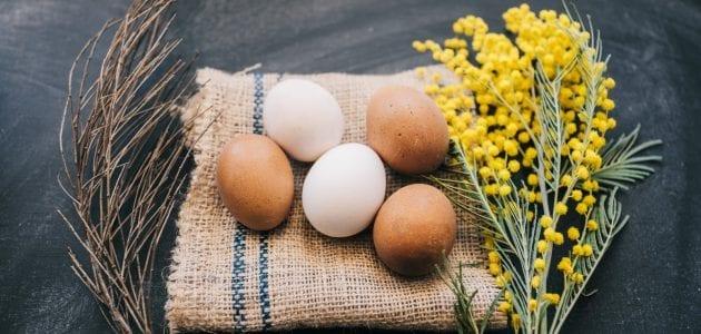 تعلم كيف توزع البيض وتربح منه في تجارة البيض