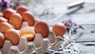 How to Start Egg Trade