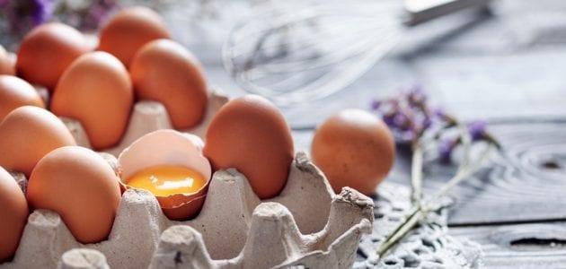 كيف تبدأ تجارة بيع البيض