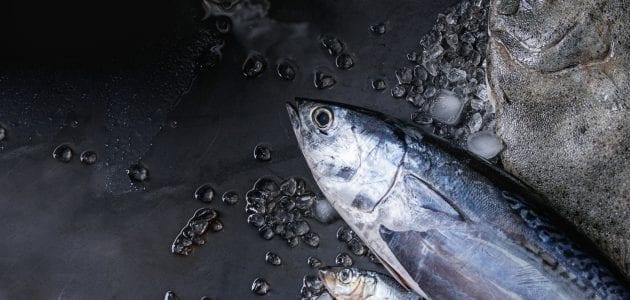 لون لحم سمك التونة