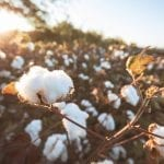Learn About Cotton Sources Around the World