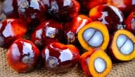 Learn More About Palm Oil