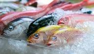 مشروع تجارة الأسماك المجمدة