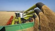 أبرز ما تنتجه الهند زراعيا