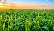 أهم المحاصيل الزراعية في الفاتيكان
