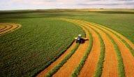 ماذا تنتج روسيا من محاصيل زراعية