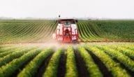 ما هي المحاصيل الزراعية في التشيك