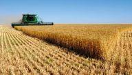 المحاصيل الزراعية في دولة جورجيا