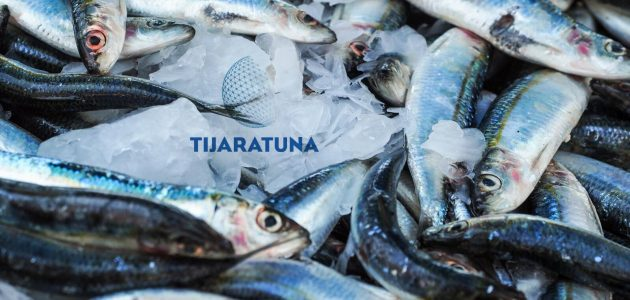 كيف تنمي مشاريع السمكية في الوطن العربي
