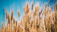 مصادر الشعير للتجارة والدول المصدرة للشعير