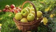 كيفية زراعة التفاح البلدي