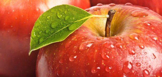 كيفية زراعة التفاح بالعُقل