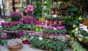 كيف أفتح محل بيع ورد في السعودية