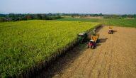 ما هي أنواع الزراعة في الوطن العربي