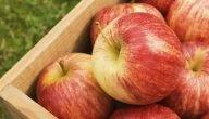 زراعة التفاح في السعودية