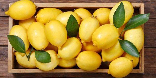 موسم زراعة الليمون في السعودية