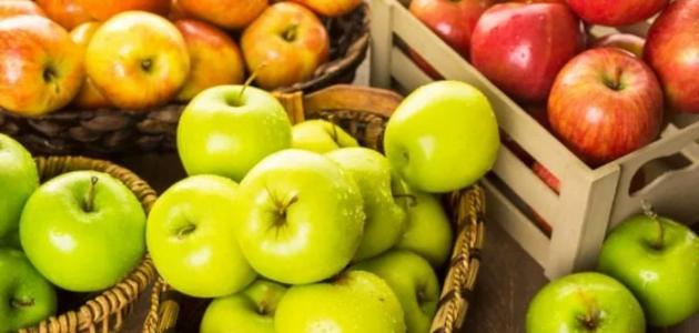 زراعة التفاح في مصر
