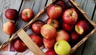 متى تثمر شجرة التفاح