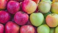 كيفية زراعة التفاح المكثف