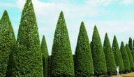 مشروع صيانة الحدائق في السويد