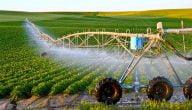 ما هي المشاريع الزراعية المربحة في تونس