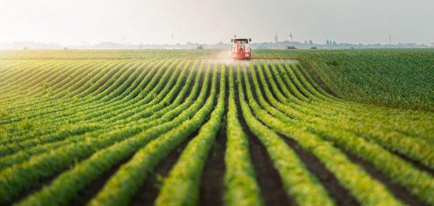 ما هي زراعة مربحة في الأردن