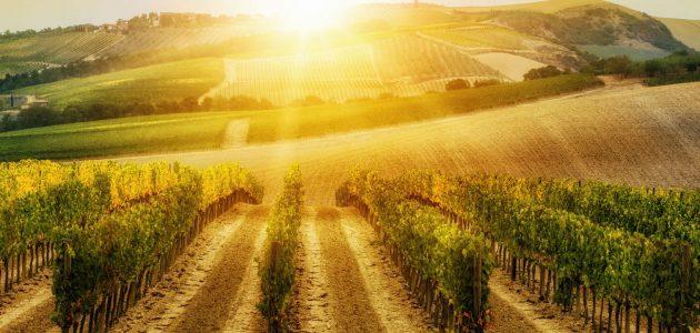 ما هي زراعة مربحة في السّودان