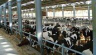 تصميمات مزارع إنتاج حيواني