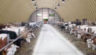 كيف يتم رسم هندسي لمزرعة تسمين عجول