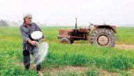 ما هي زراعات المربحة في فلسطين