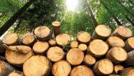تأسيس معمل خشب
