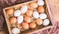 مشروع توزيع البيض بالتفصيل