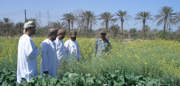 ما هي الزراعات المربحة في سلطنة عمان