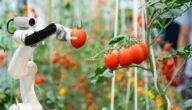 شرح التكنولوجيا الزراعية