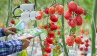 إستخدام التكنولوجيا الموجات الصوتية في الزراعة