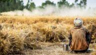 أثر المخلفات الزراعية في البيئة