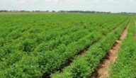 تلوث البيئة الزراعية