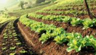 ما هي مشكلات التنمية الريفية و شرح نهج التنمية الريفية التقليدية