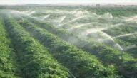 مشاكل الزراعة في العالم العربي والسبل الخاصة في معالجتها