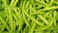 مواسم زراعة اللوبيا وطريقة زراعة شجرة اللوبيا