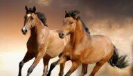 أسرع الخيول في العالم ومواطنها