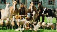 أهمية الإنتاج الحيواني شرح شامل