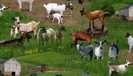 استثمار تربية الحيوانات في المزرعة