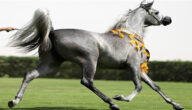 الأنواع الرئيسية للخيول ومواطنها