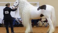 شروط وآليات استيراد الخيول الأصيلة