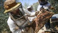 عوامل نجاح تربية النحل في تركيا