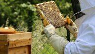مشروع تربية النحل في الأردن