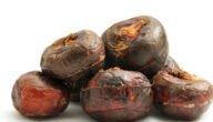 مواسم زراعة الإيليوكاريس الحلو طريقة زراعة الإيليوكاريس الحلو